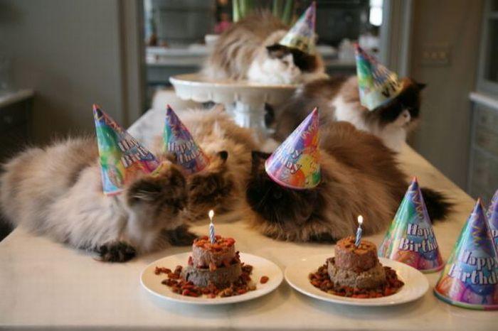 Смешные поздравления от котов 440